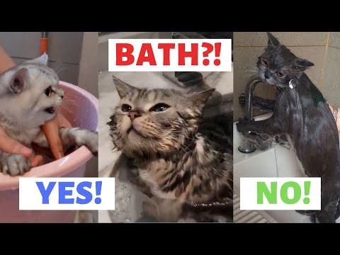 CAT HATE TO BATH vs CAT LOVES TO BATH | Funny Cute Cats that just hate taking a bath