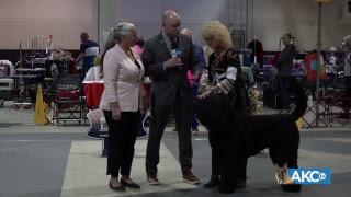 2019 Raleigh Kennel Club Dog Show