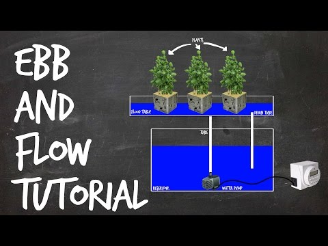 Hydroponic Flood Amp Drain Basic Rundown Doovi