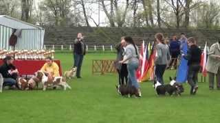 """Best Breeding Group - Welsh Corgi Cardigan Kennel """"gaucho"""""""