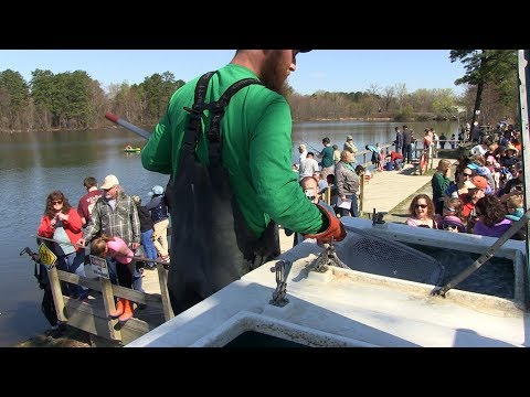 Fish Stocking And Free Fishing At Six Mile Waterworks