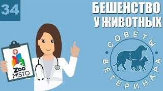 Бешенство у животных | Что делать после укуса | Симптомы Бешенства | Советы Ветеринара