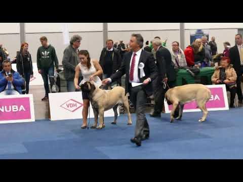 """World Dog Show Leipzig 2017 OEM """"Females & Best of Breed"""""""