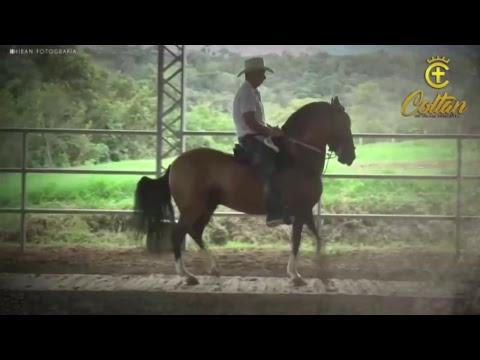 XXXIV Nacional Equina - Valledupar Fedequinas Día 4 - TROCHA COLOMBIANA