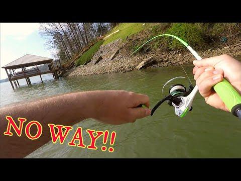 10 SPECIES?!! Fishing CHICKAMAUGA Lake (SURPRISING!!)