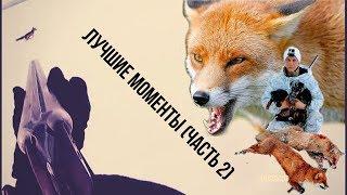 Охота с ягдтерьером, лучшие моменты (часть 2).Fox Hunt with Jagdterrier