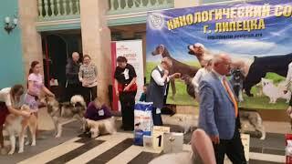 выставка собак 10 02 2018 г Липецк Всероссийка  Эксперт Жук А