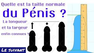 Quelle est la  taille normale du pénis  ?