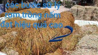 Các bước sữ lý rơm để trồng nấm rơm đạt hiệu quả cao.