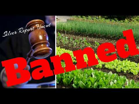 Gardening Ban Upheld By Appeals Court! Organic Gardening Illegal For Miami Residents