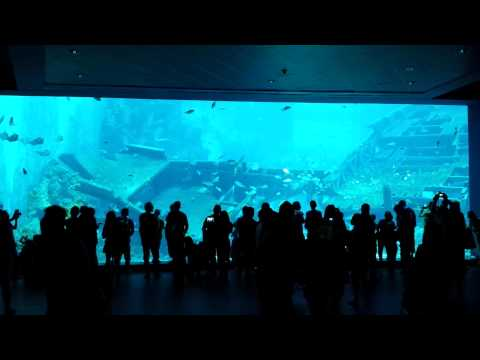 Belitung Shipwreck - World Biggest Aquarium