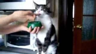 Самые прикольные коты!!! (подборка)