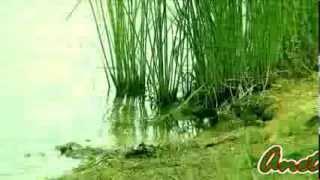 Download Сергей Грищук-красивая музыка Mp3 and Videos