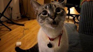 Диалог с котом
