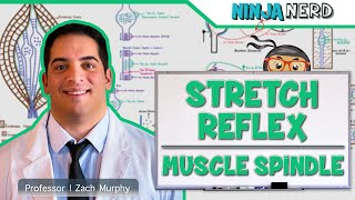Neurology | Spinal Cord: Stretch Reflex | Muscle Spindle