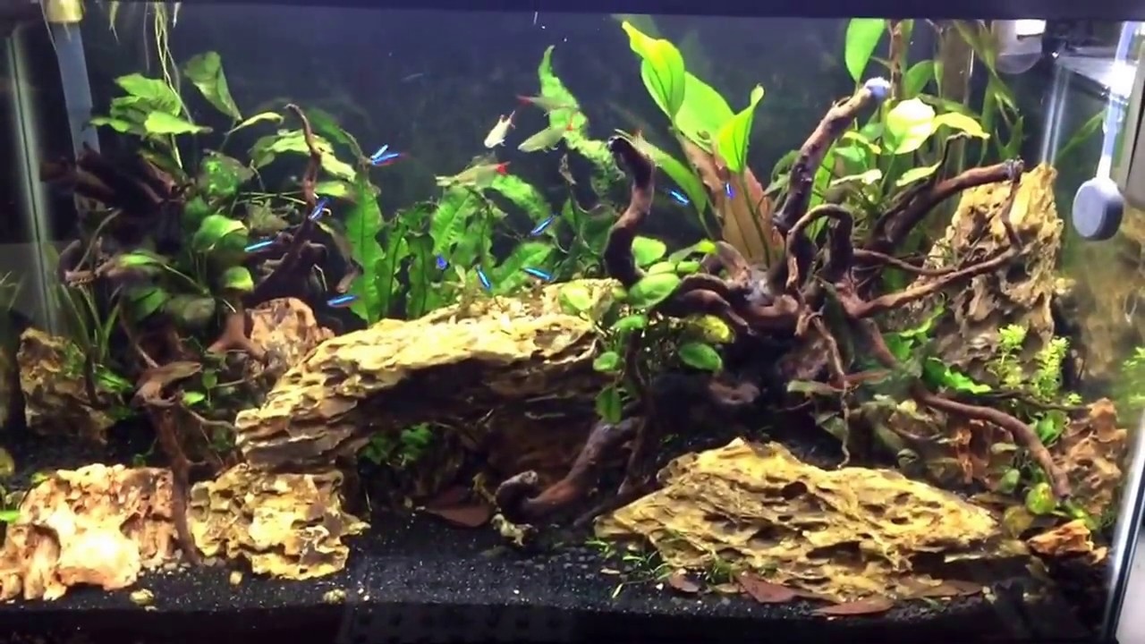 new 29 gallon dragonstone and spiderwood tank youtube