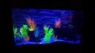 disco fish tank