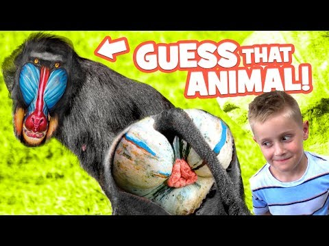Thumbnail: Name that Butt! Family ZOO Trip & Funny Animals Game for Kids & Families by KIDCITY