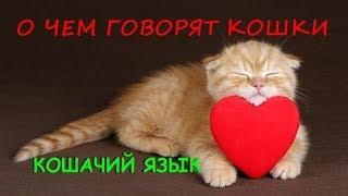 О ЧЕМ ГОВОРЯТ КОШКИ   КОШАЧИЙ ЯЗЫК  ABOUT CATS  CAT LANGUAGE