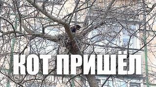 Жил-был кот в гнезде 📹 TV29.RU (Северодвинск)