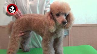 Japan Pet Massage Association・BASIC ROUTINE ②
