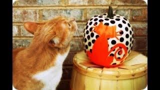 Halloween Halloween Pumpkin