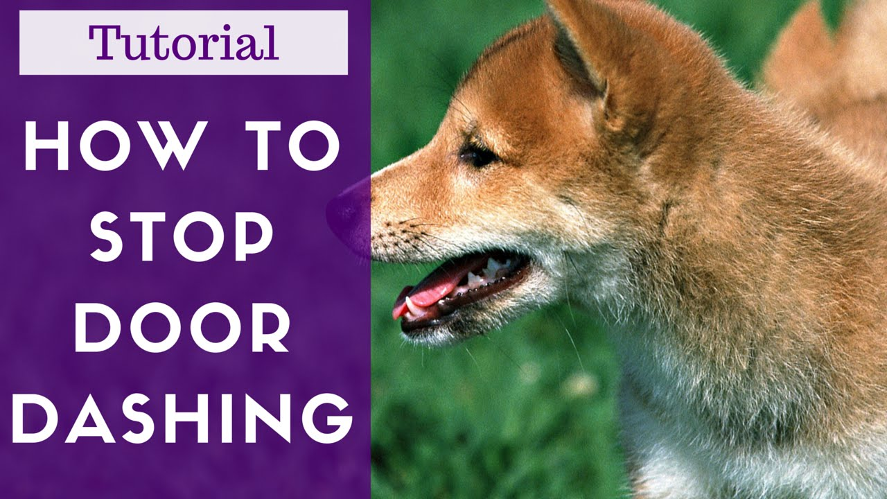 How To Train Your Dog Not To Run Out The Door Tutorial Youtube
