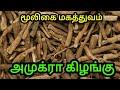 அமுக்ரா கிழங்கின் மருத்துவ பயன்கள் | சித்த மருத்துவம் |  Withania somnifera in Tamil  |