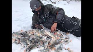 ВСЕ ХОТЯТ НА ТАКУЮ РЫБАЛКУ ЖОР ОКУНЯ НА БАЛАНСИР Рыбалка 2020 Обь fishing perch