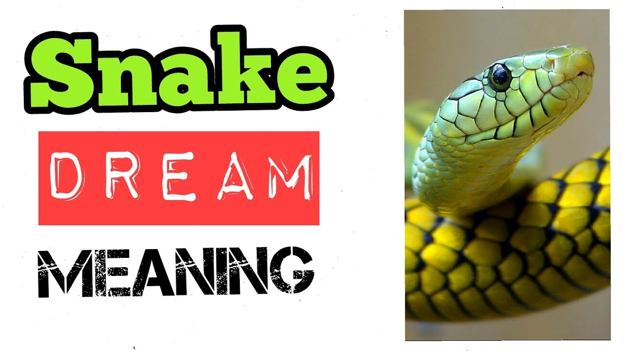 What is new snake dream meaning and interpretation youtube what is new snake dream meaning and interpretation biocorpaavc Image collections