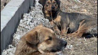 Мужчина выстрелил в собаку, которая облаяла прохожего, в Хабаровске.MestoproTV