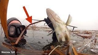 В ЭТИХ КУСТАХ ПОЛНО СУДАКА.Подводная охота на судака в плавнях.spearfishing