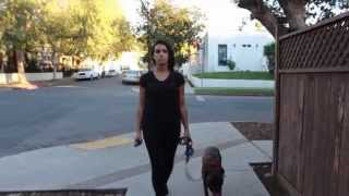 10 Hours of Walking in LA as a Woman ... with a dog