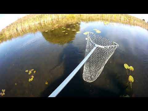 Щука на поплавок.  Живец лучшая приманка.  Рыбалка во Владимире (видео содержит мат).