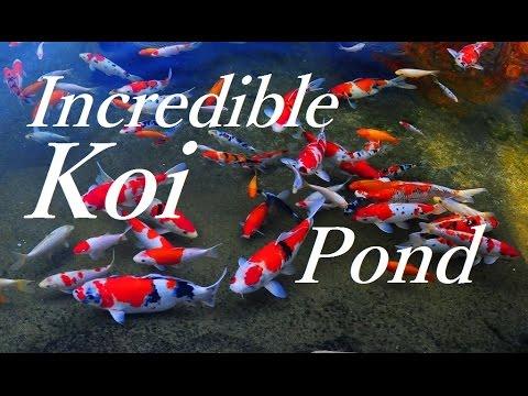 World 39 s greatest relaxing koi pond youtube for Best koi pond