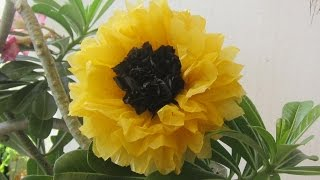 recycle plastic bags- sunflower