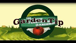Growing Tips for Better Carrots Garden Tip