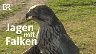 Selbst gejagt: Hasenbraten vom Falkner | Zwischen Spessart und Karwendel