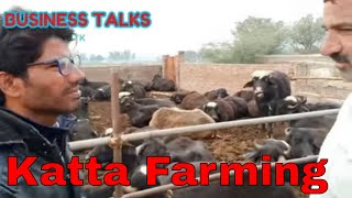 Katta Farming in Pakistan|How To Start Katta Farming|Katta Farm in Punjab|Kattay Farming|