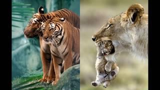 Чудесные фотографии из мира животных