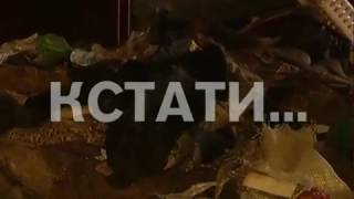 Жуткая трагедия в Приокском районе - собаки съели свою хозяйку
