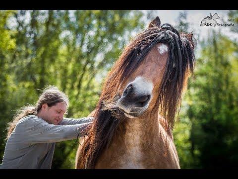 ~ Ultimate Horse Bloopers ~ TOP20!!