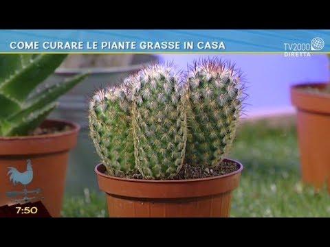 Come Curare Le Piante Grasse In Casa Youtube