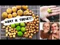 Harvesting RARE JUNGLE FRUITS on Ko Kood, Thailand