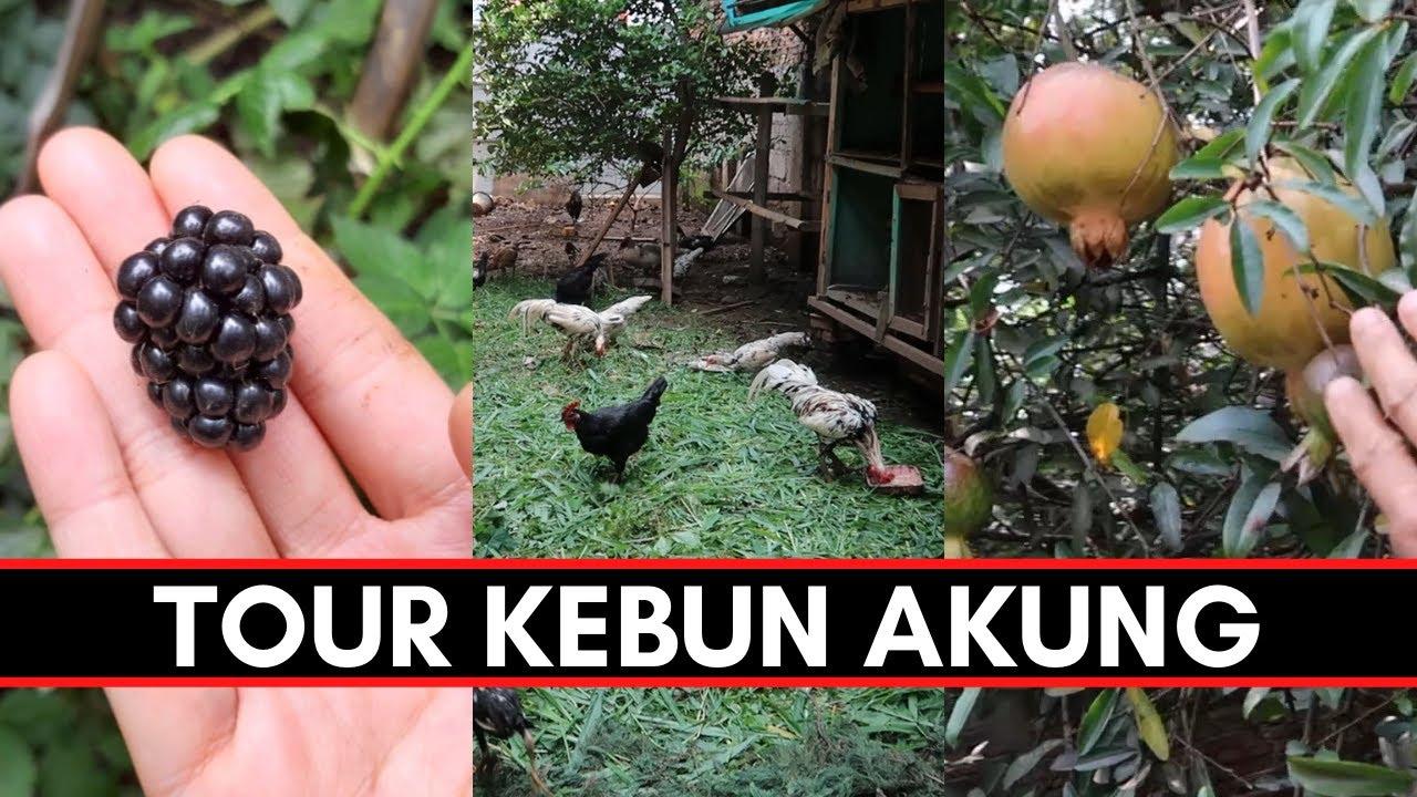 Ep.116 garden tour ke kebun papanya momi di Cimahi