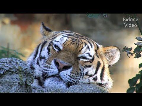 Zoo Leipzig - Relaxing Video