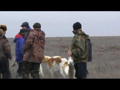 РПБ Кубок Резвости  Hunt with Russian Borzoi (The Cup in Kalmykia)