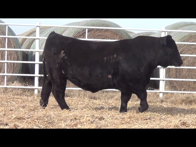 Express Ranches Lot 187