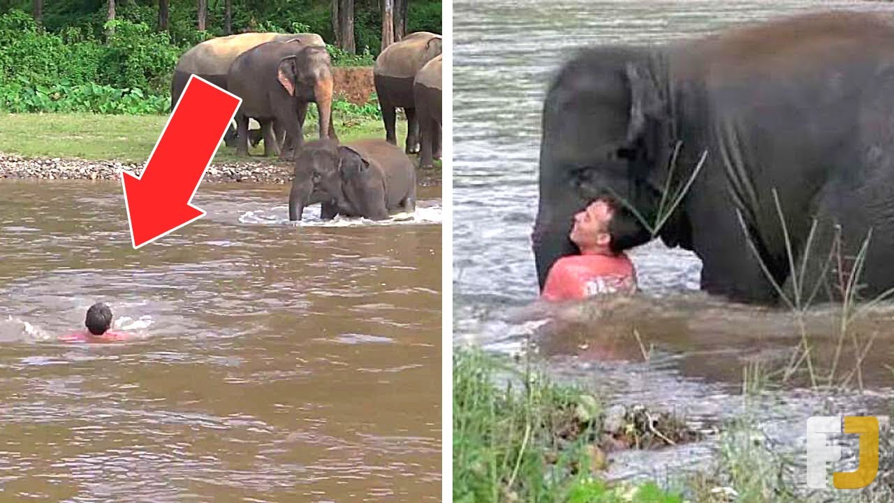 10 Heroic Animals That Saved Humans Lives