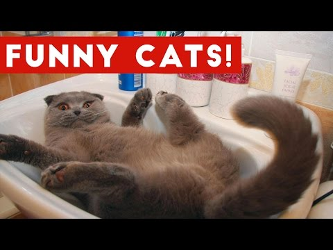 Funny Cats Compilation 2017   Best Funny Cat Videos Ever